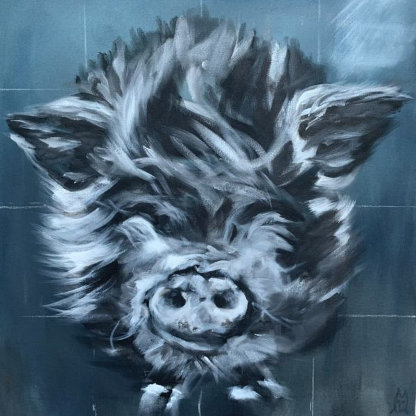Pig without name